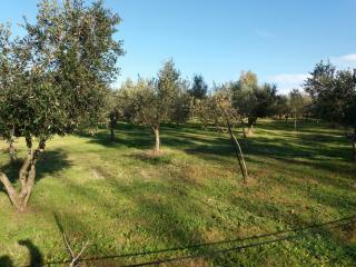 Terreno agricolo in vendita a Cecina (LI)
