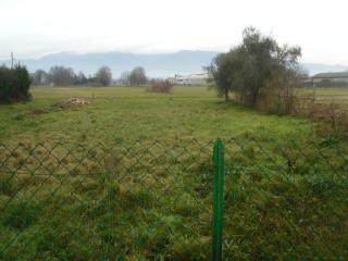 Foto 11/11 per rif. trc lamm 160g