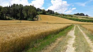 Azienda agricola a Capannoli (2/5)