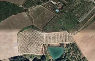 Terreno agricolo a Barberino Val d'Elsa (1/1)