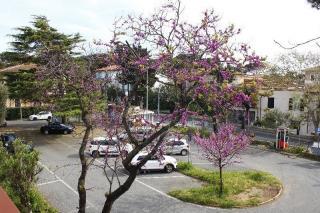 Foto 4/18 per rif. V1264