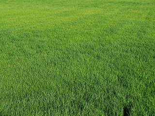 Terreno agricolo in vendita a San Miniato