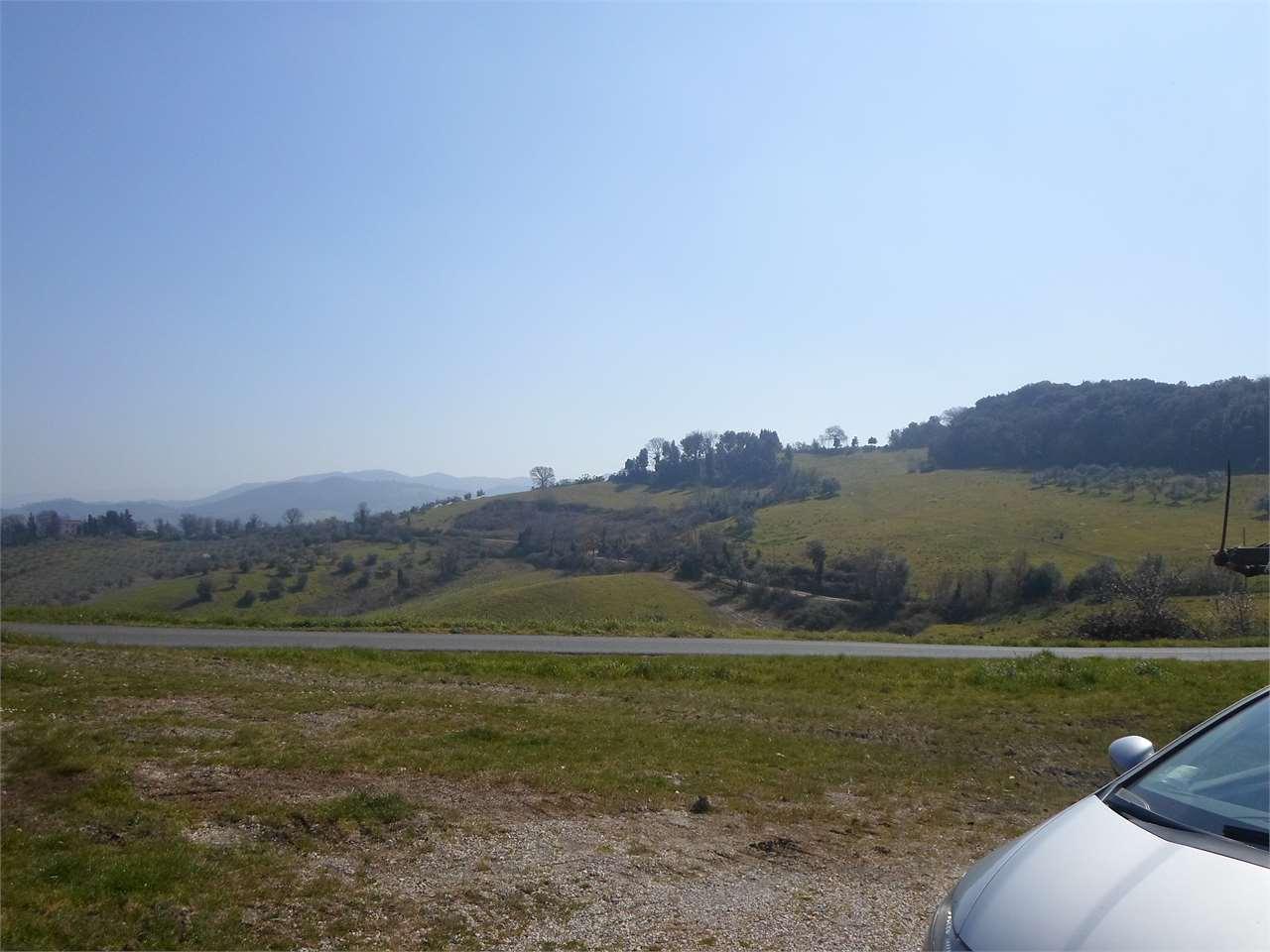 Azienda agricola a Volterra (2/5)