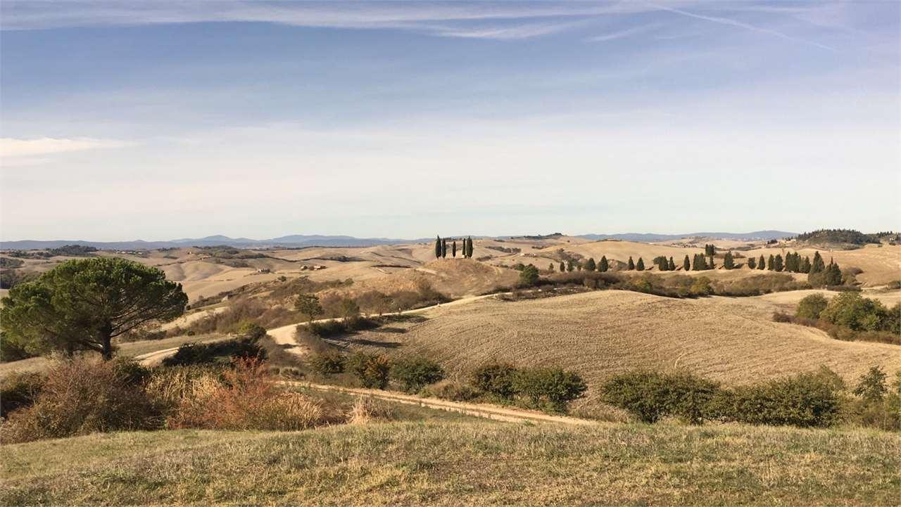 Azienda agricola a Castelnuovo Berardenga (4/5)