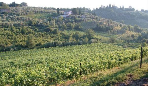Agriturismo a Montepulciano (5/5)