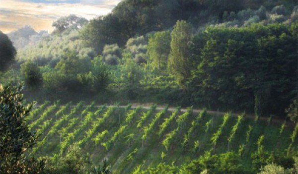 Agriturismo a Montepulciano (2/5)