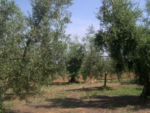 Azienda agricola in vendita a Cecina (LI)