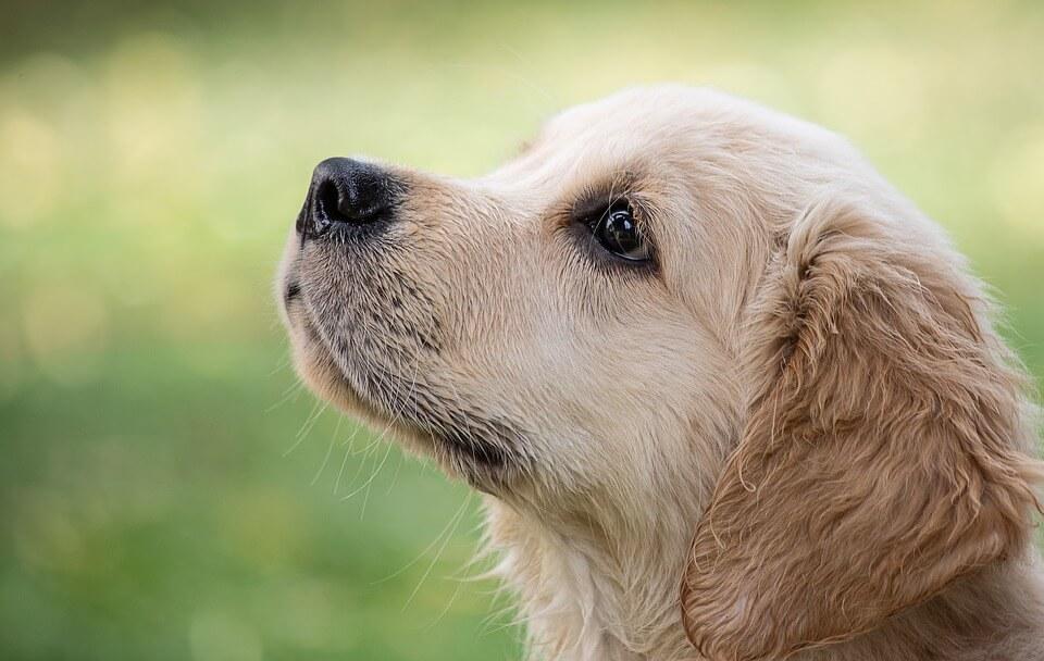 Cambio casa: come aiutare il tuo cane a vivere il trasloco senza stress?