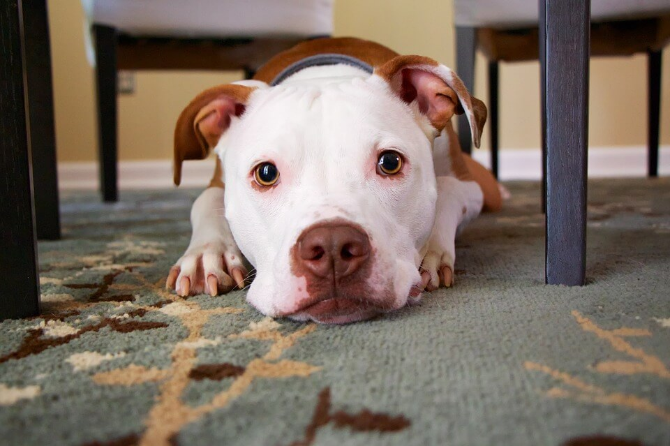 Animali in condominio: diritti e doveri del proprietario.