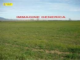 Terreno agricolo in vendita a Pisa