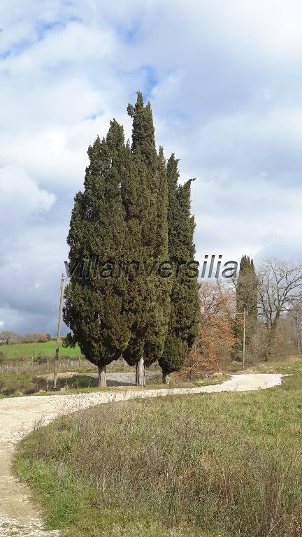 Foto 6/8 per rif. V 2216 Toscana