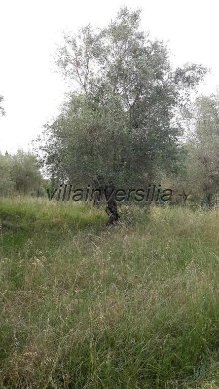 Foto 7/15 per rif. V 6616 rustico Lucignano