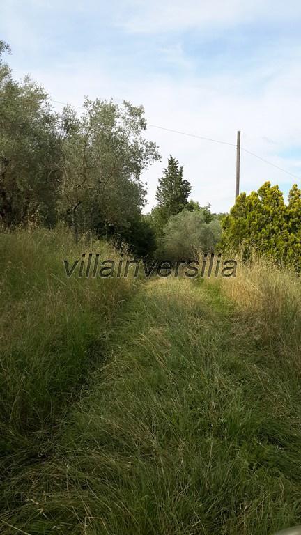 Foto 14/15 per rif. V 6616 rustico Lucignano
