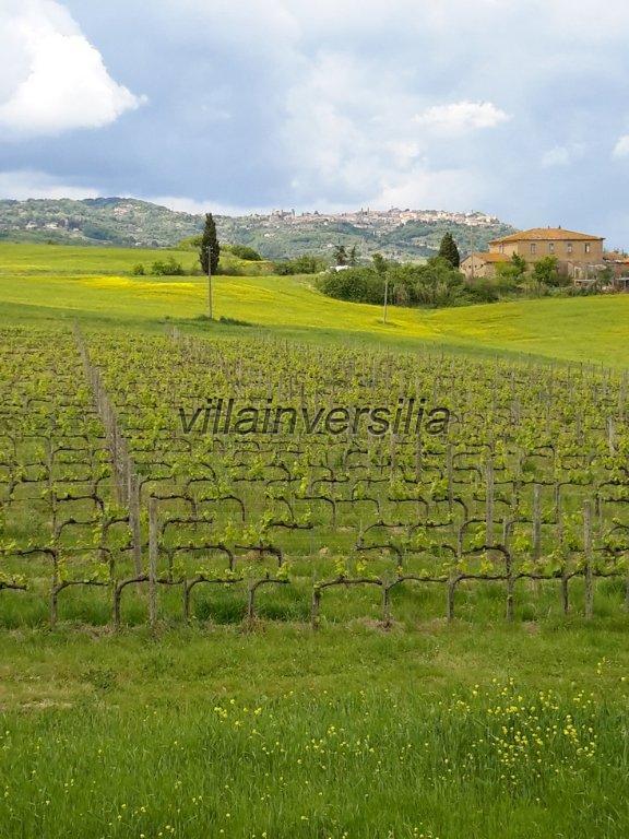 Foto 42/42 per rif. V 11016 casale Montalcino