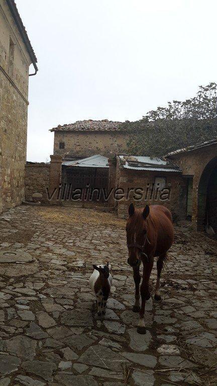 Foto 23/42 per rif. V 11016 casale Montalcino