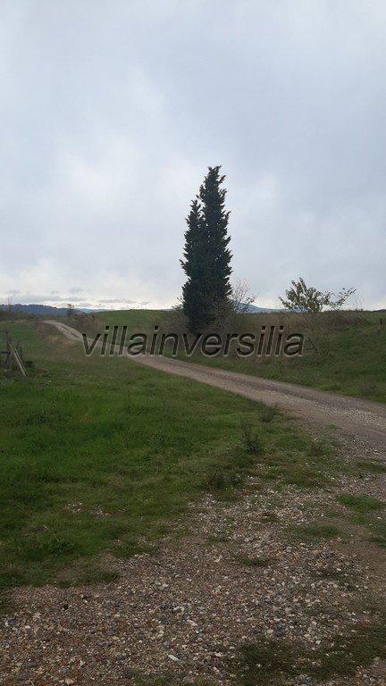Foto 26/38 per rif. V 11116 rustico Montalcino
