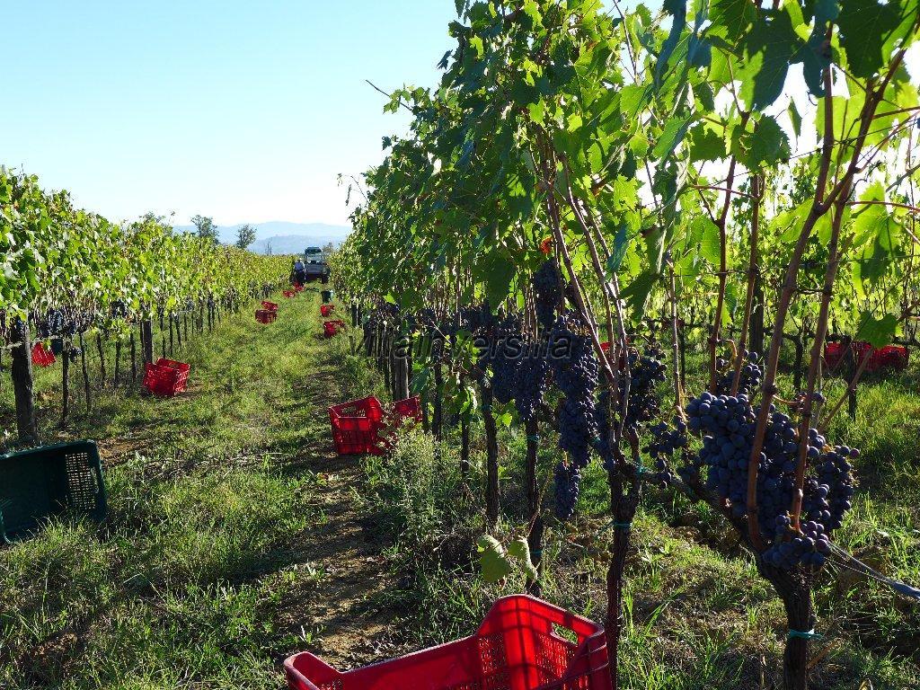 Foto 16/16 per rif. V 3517 vinicola Chianti