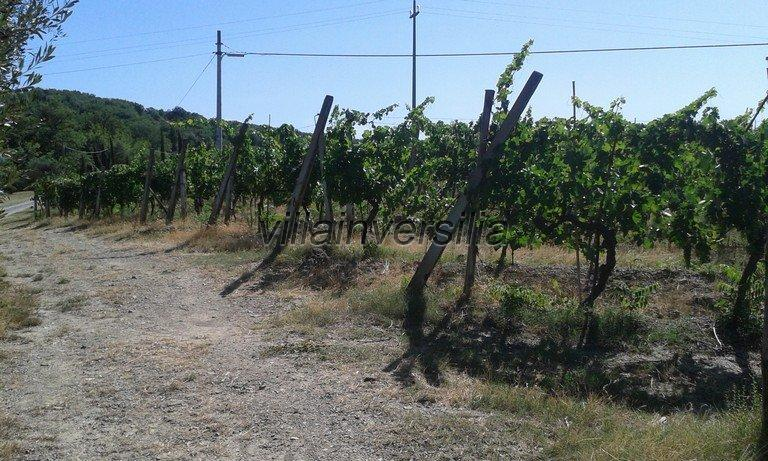 Foto 10/16 per rif. V 3517 vinicola Chianti
