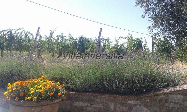 Foto 3/16 per rif. V 3517 vinicola Chianti