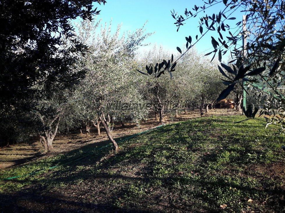 Foto 11/33 per rif. V 8517 casale Toscano