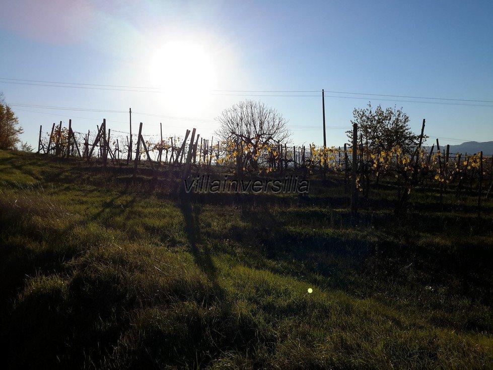 Foto 12/33 per rif. V 8517 casale Toscano