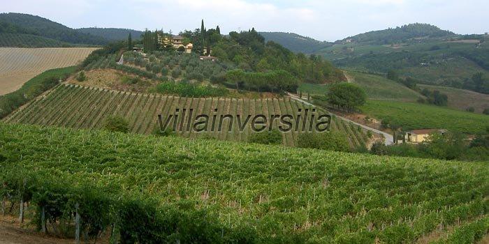 Foto 2/11 per rif. V 9617  azienda San Gimignano
