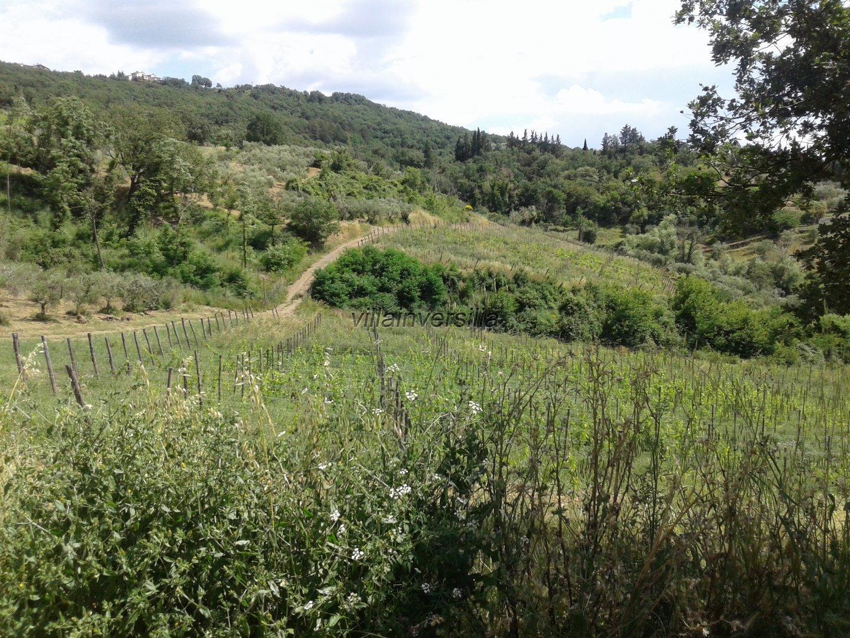 Foto 1/5 per rif. V 9717 azienda agricola Siena