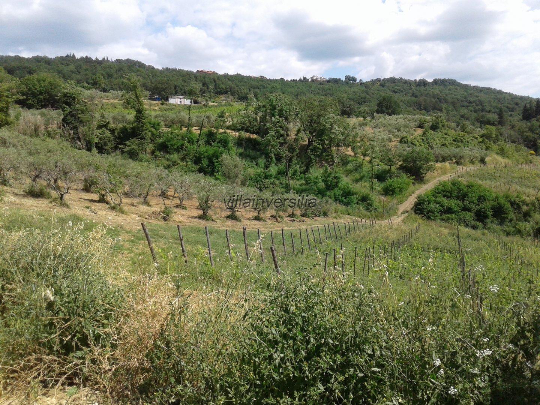 Foto 2/5 per rif. V 9717 azienda agricola Siena