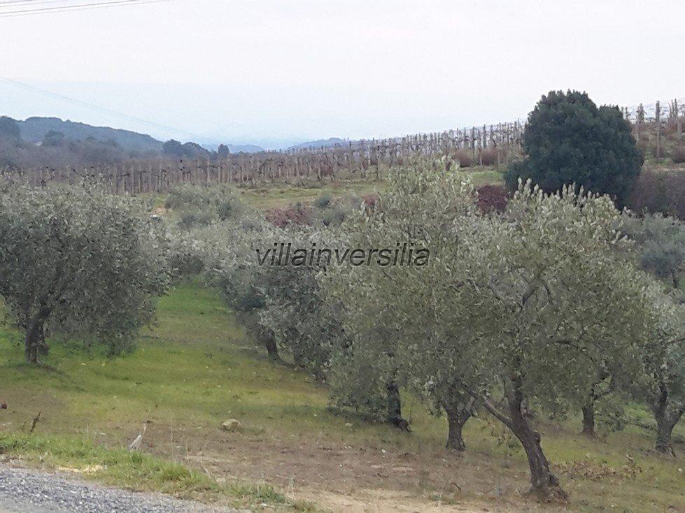 Foto 3/19 per rif. V62018 Fattoria Siena