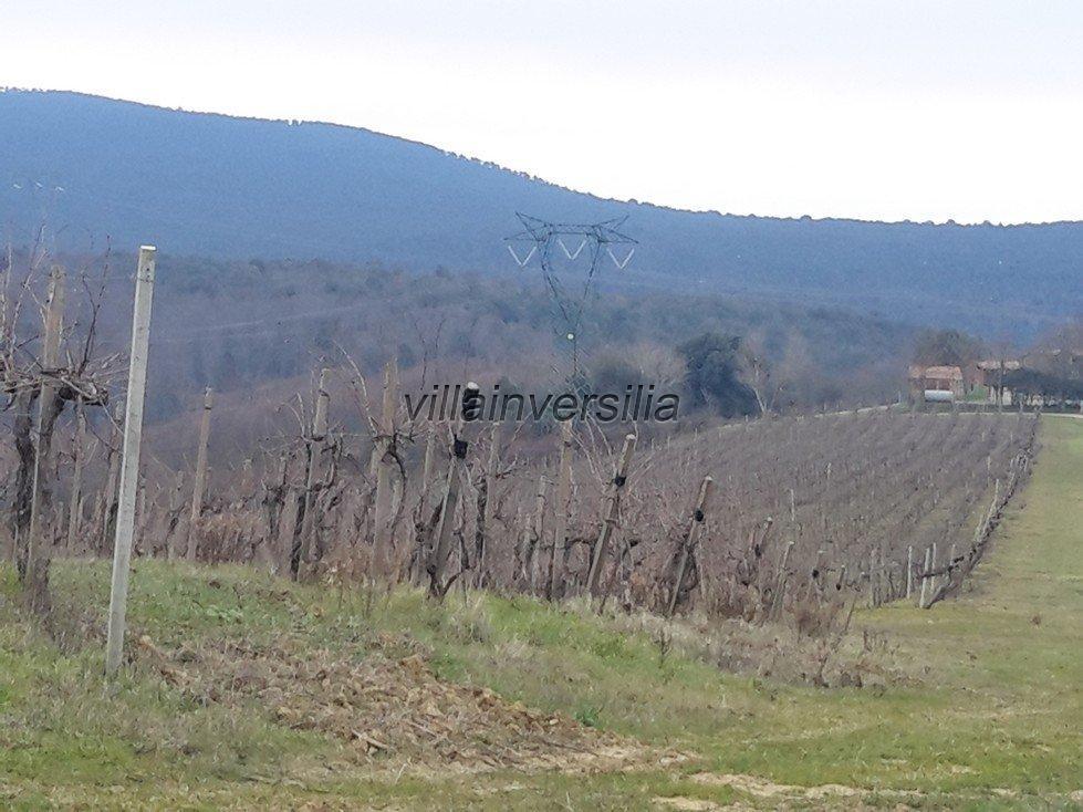 Foto 10/19 per rif. V62018 Fattoria Siena
