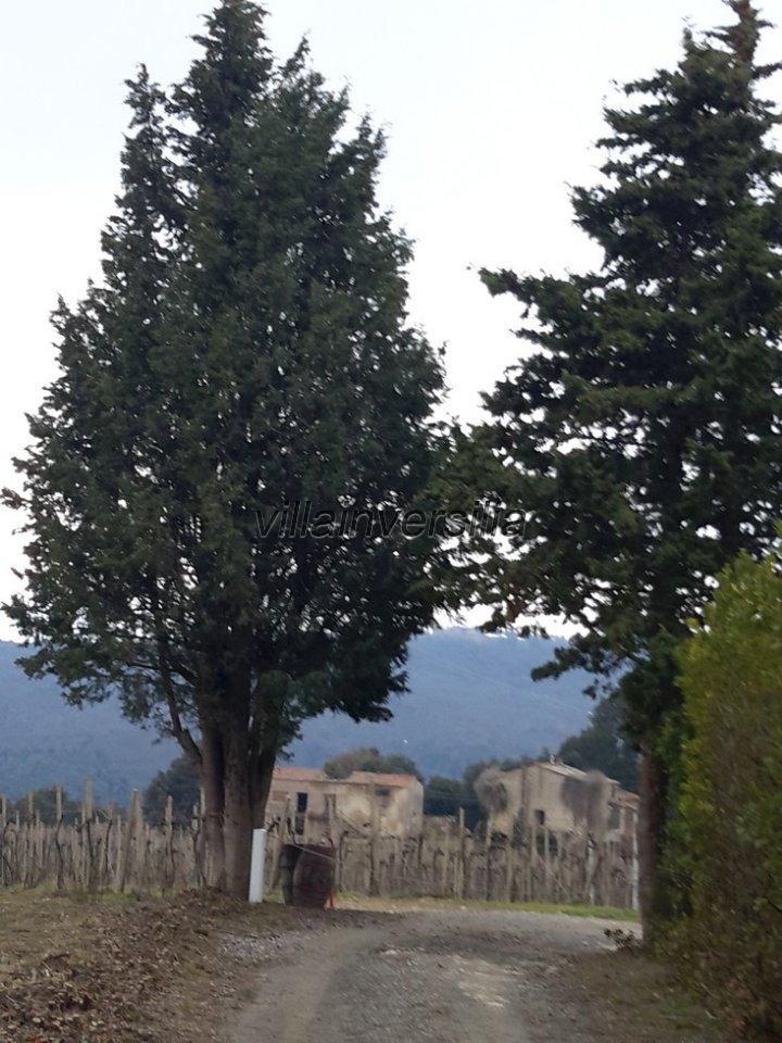 Foto 15/19 per rif. V62018 Fattoria Siena