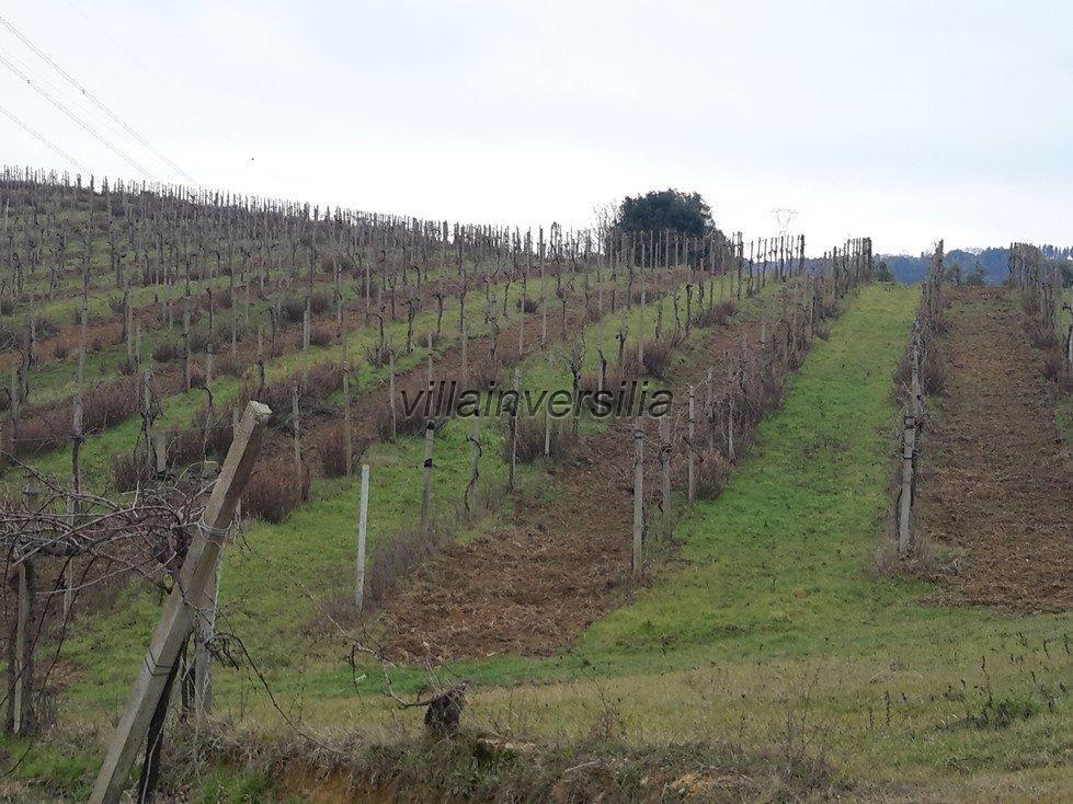 Foto 6/6 per rif. V 112018 rustico San Gimignano