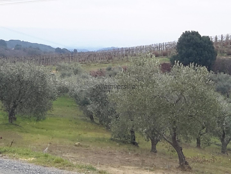 Terreno agricolo a San Gimignano