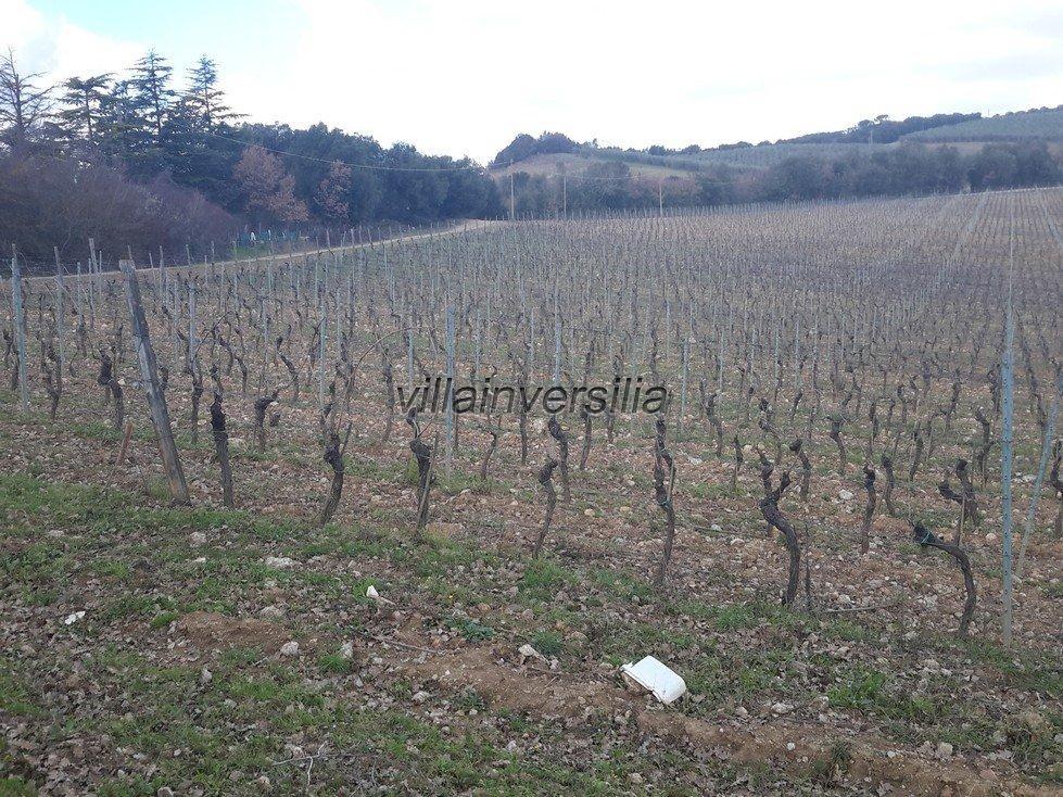 Foto 1/19 per rif. V332018 azienda Siena
