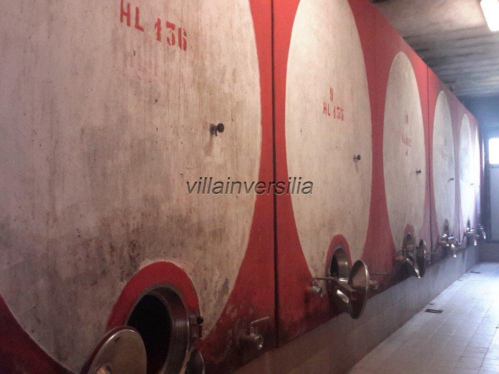 Foto 10/19 per rif. V332018 azienda Siena