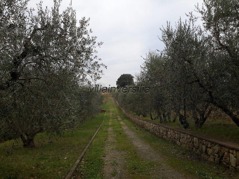 Foto 5/11 per rif. V 62018 podere Toscana