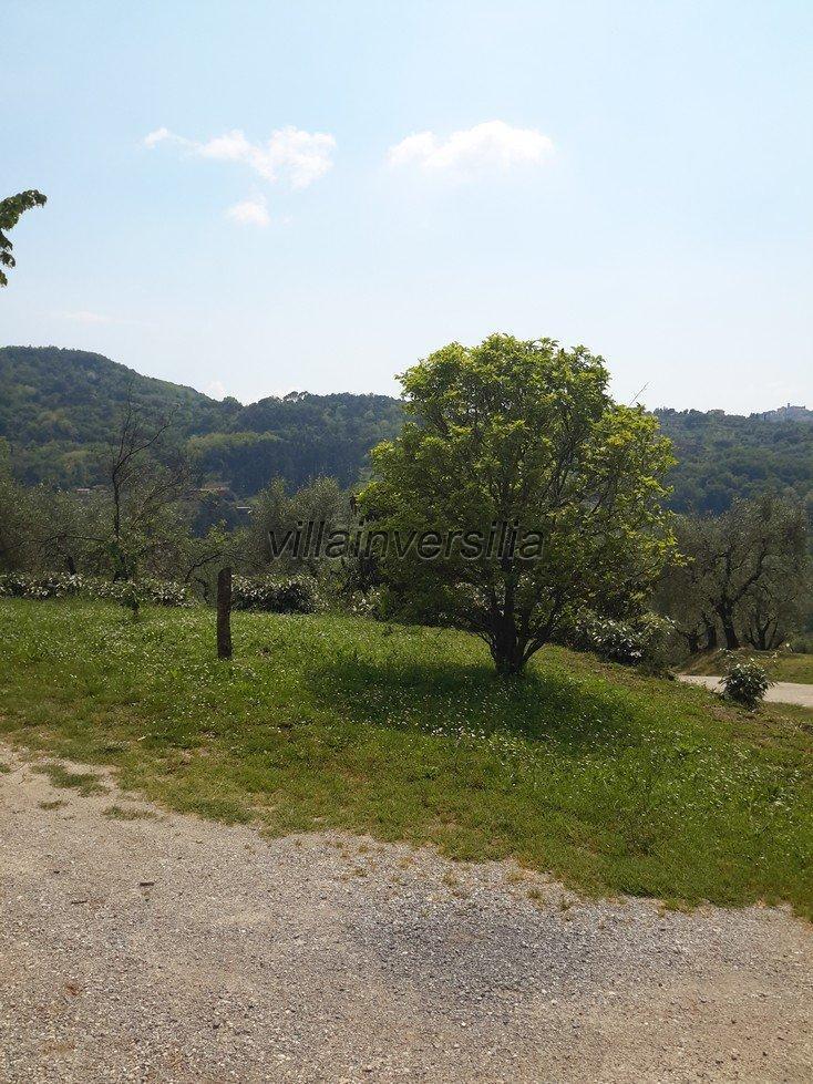 Foto 25/28 per rif. V 432018 casale colline Pistoia