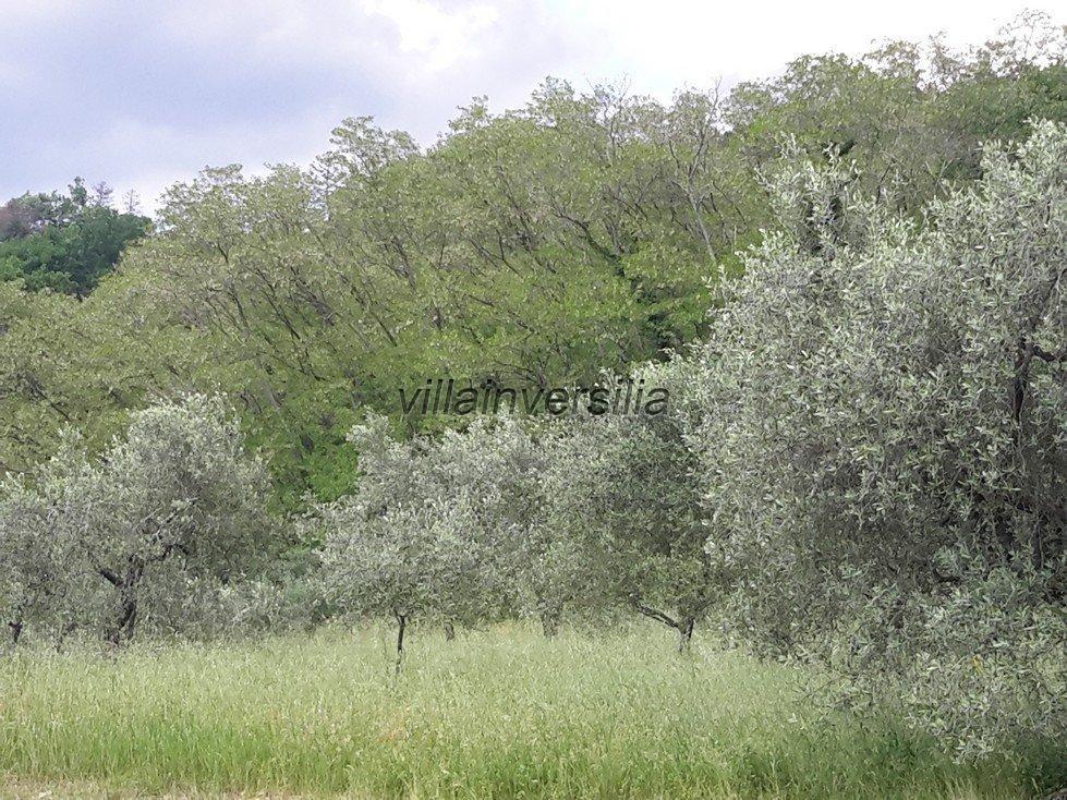Foto 27/28 per rif. V 432018 casale colline Pistoia