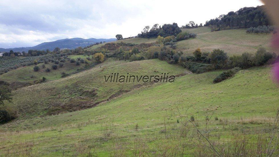 Foto 17/19 per rif. V 782018 azienda Volterra