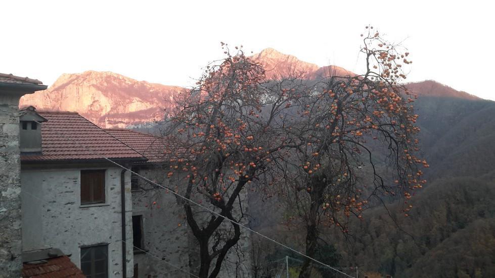 Foto 13/13 per rif. V 802018 casa rustica Versilia