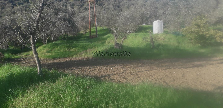 Foto 5/6 per rif. V 102019  terreno con ulivi