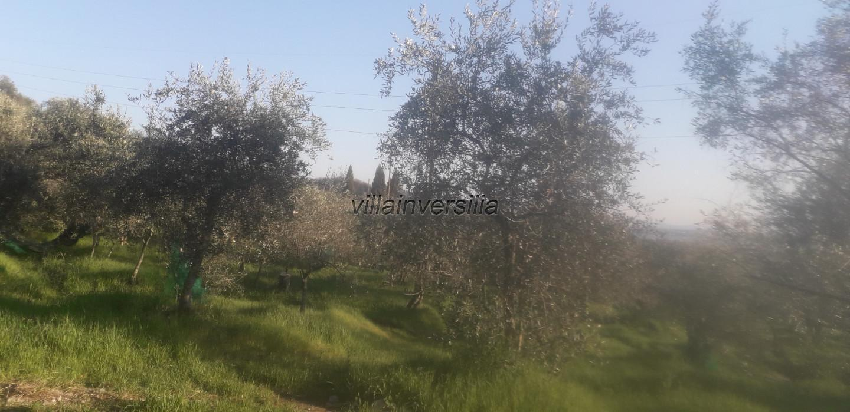Foto 3/6 per rif. V 102019  terreno con ulivi
