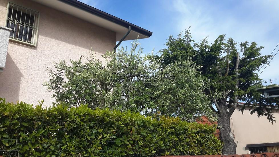 Foto 13/13 per rif. V 312019 villa mare Pietrasanta
