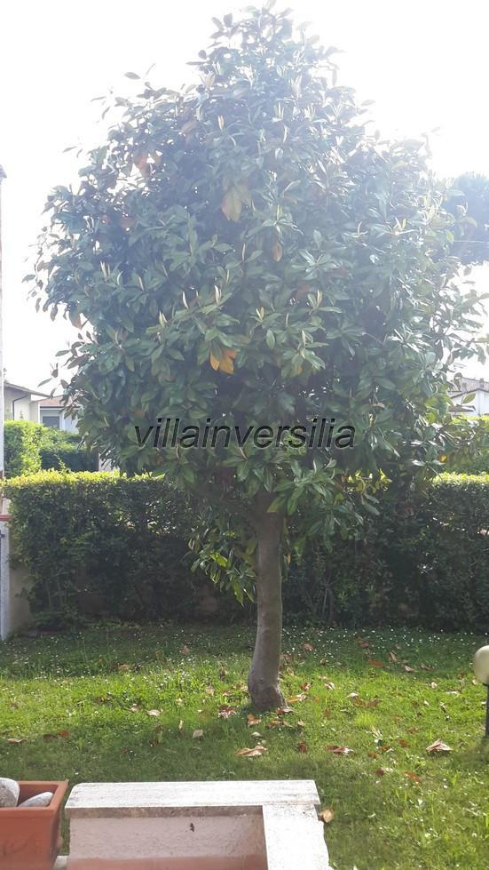 Foto 3/13 per rif. V 312019 villa mare Pietrasanta