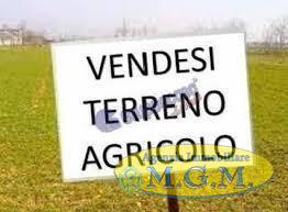 Mgmnet.it: Terreno agricolo in vendita a Santa Maria a Monte