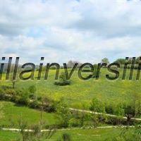 Foto 4/10 per rif. V 382019  terreno  per allevamen