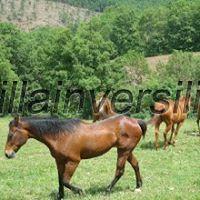 Terreno agricolo a Roccalbegna