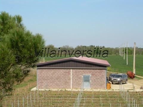 Photo 10/11 for ref. V  612019 azienda Castiglione de