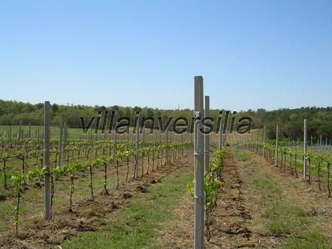 Photo 2/11 for ref. V  612019 azienda Castiglione de