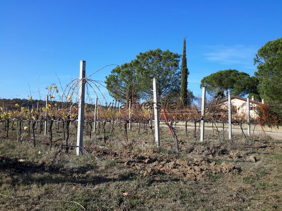 Photo 3/11 for ref. V  612019 azienda Castiglione de